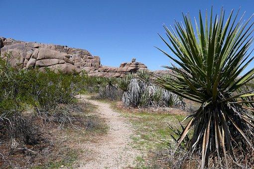 Yoshua Tree, National Park, California, Desert, Usa