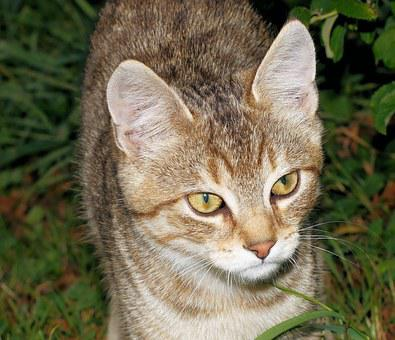 Cat, Young Animal, Portrait, Dear, Friendly, Smoochy