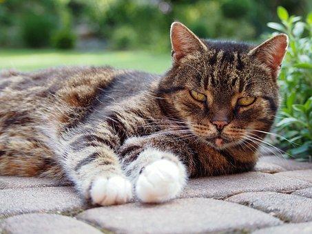 Cat, Pet, Kitten, Calm Cat, Look, Looking Cat