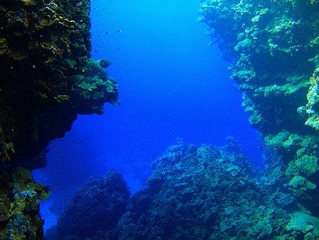Reef, Rotesmeer, Underwater