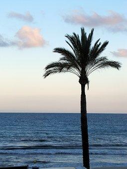 Sunset, Beach, Sea, Palm, Mallorca, Paguera