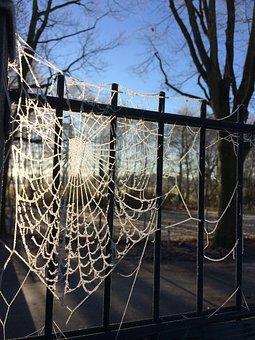 Frost, Spider Webs, On Frozen, Winter, Dew