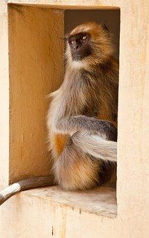 Monkey, Window, House, Wild, Animal