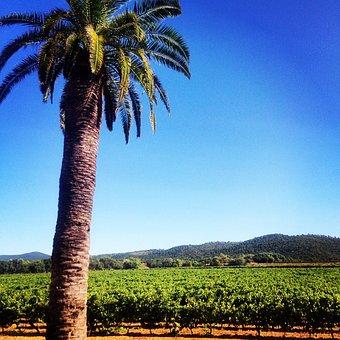 Palm, Vine, Wine, South, France, Tree, Field