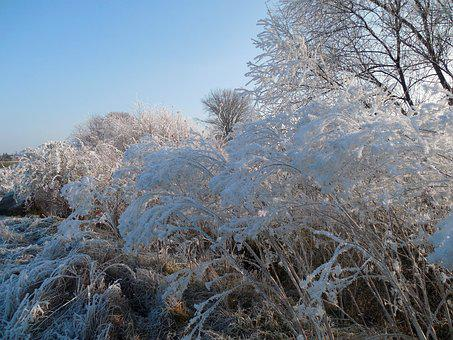 Winter, Wintry, December, Winter Bushes, Frost, Cold