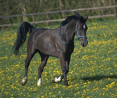 Horse, Whey, Spring, Horses