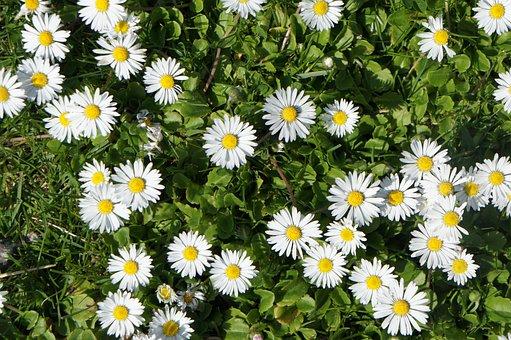 Flowers, White, Grass, Summer, Nature, White Flowers