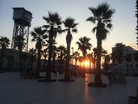 Palms, Sunset, Barcelona