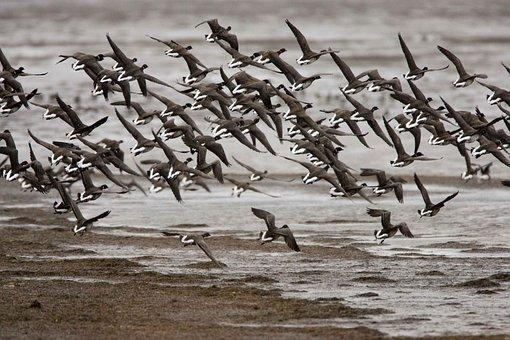 Landing, Prepare, Flock, Birds, Animals, Fauna