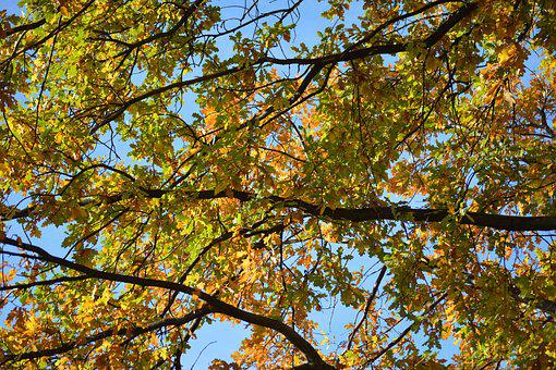 Autumn, Fall, Branches, Leaves, Colorful, Tree, Orange