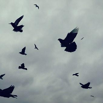 Birds, Flight, Sky, Wing, Flying, Nature, Feather