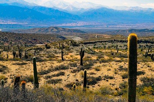 Argentina, Landscape, Cactus, Cacti, Plants, Desert