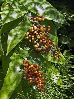 Berries, Forest, Plant, Natural, Botanical, Organic