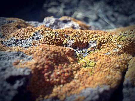 Stone, Fungus, Fungi, Texture, Orange, Rock