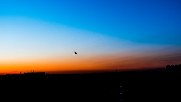 Blue, Orange, Silhouette, Chenguang, The Morning Sun