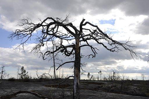 Tree, Dead Tree, Forest Fire