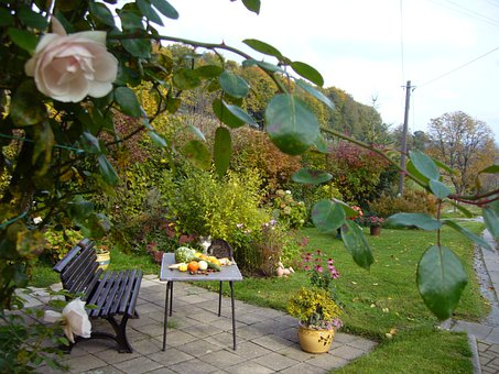 Terrace, Bank, Cozy, Autumn, Roses, Nature, Table