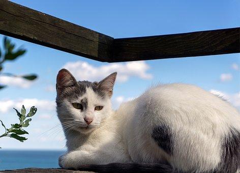 Cat, Sun, Great, Wood, Sky, Waves, East, Cloud, City