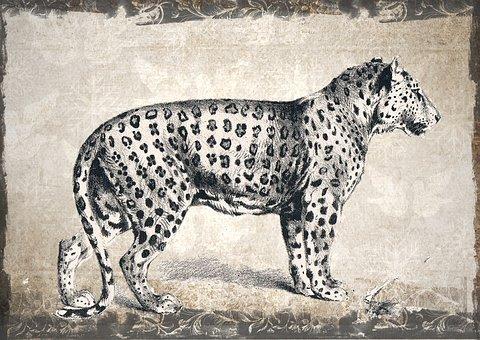 Leopard, Wildlife, Animal, Wild, Nature, Carnivore