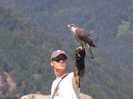 Austria, Carinthia, Eagle Show At Castle