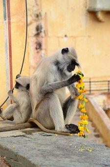 Monkey, Flowers, Food, Palace, India