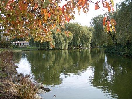 Lake, Water, Maple Leaf, Park, Fall, Autumn, Trees