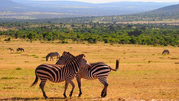 Kenya, Africa, Wild, Nature, Safari, Wildlife, Animal
