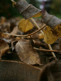 Autumn, Leaves, Fall Foliage, Dry, Brown, Fall Leaves