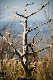 Tree, Nature, Natural, Environment, Outdoor, Park, Wood