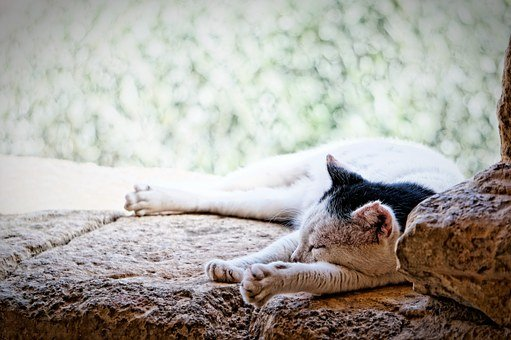 Cat, Crete, Monastery, Sleep, Break, Lazy, Slow