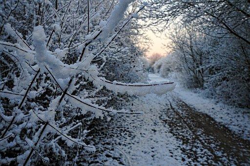 Snow, Path, Aurora, Morning, Market