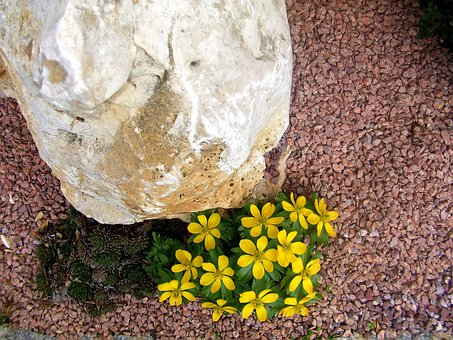 More Unusual Stone, Yellow Spring Flowers