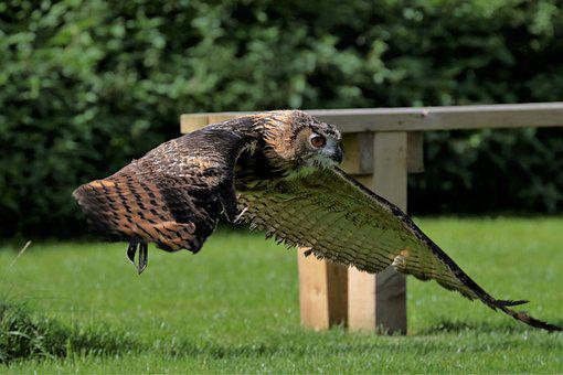Eagle Owl, Owl, Bird, Animal, Wildlife, Nature, Wild