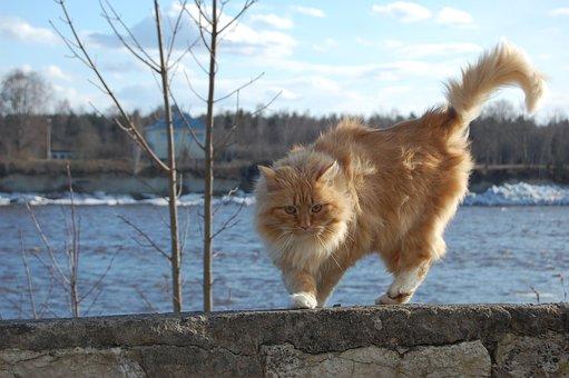 Animal, Redhead, Cat, Color, Nicely, Internal, Eyes