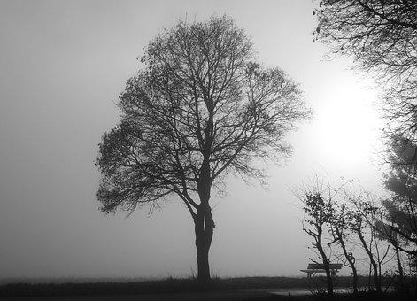 Fog, Tree, Mood, Back Light, Nature, November Mood