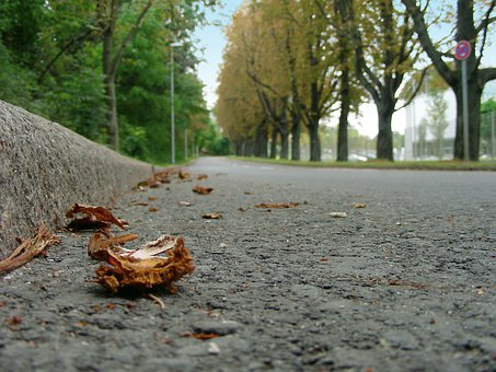 Road, Tar, Asphalt, Away, Autumn, Fall Foliage, Leaves