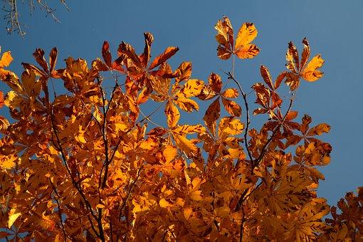 Fall Foliage, Fall Leaves, Gold, Autumn Colours, Tree