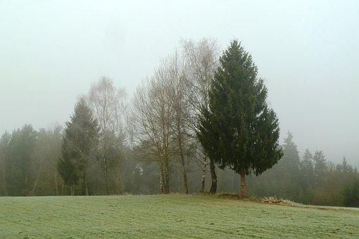 Fog, November, Tree, Grove Of Trees, Fog Day, Landscape