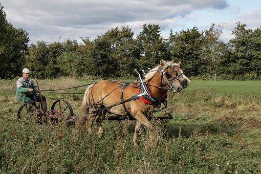 Haflinger, Horses, Horse, Mccormick-mower, Lawn Mowing
