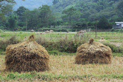 China, Yangshuo, Landscape, Rural Landscape