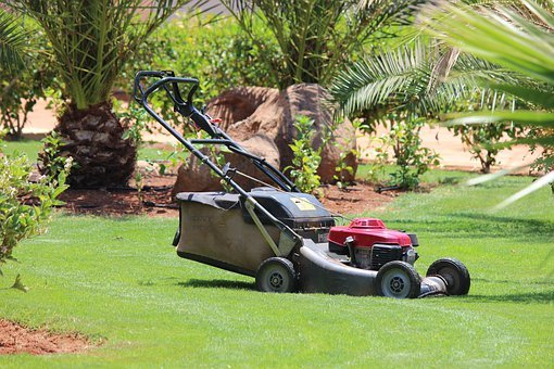 Lawn Mower, Lawn, Grass, Palm Trees, Cape Verde