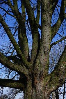 Tree, Log, Aesthetic, Chestnut, Bark, Chestnut Tree