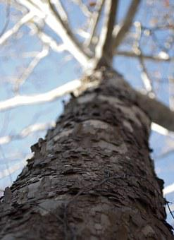 Trees, Bark, Woods, Wooden, Woody, Stems, Looking Up