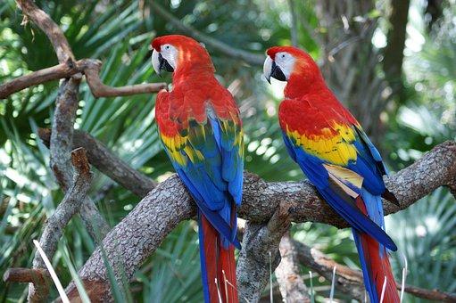 Macaw, Red, Parrot, Bird, Colorful, Big, Beak, Large