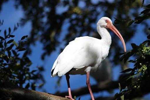 White Bird, Bird On A Tree, Nature, Animals