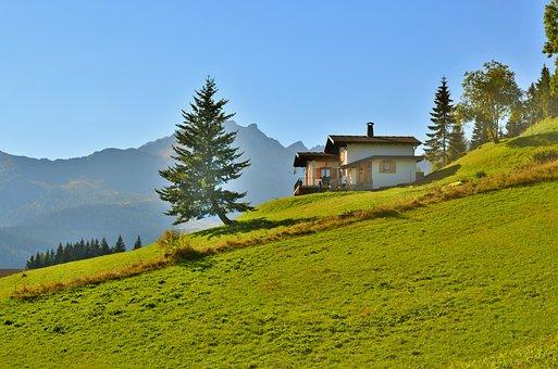 Sauris, Mountain, Tree, Pine, Mountains, Nature, Trees