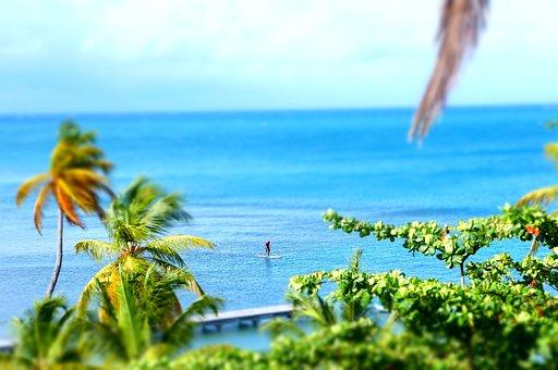 Surf, Water, Palm Tree, Surfboard, Surfer, Board