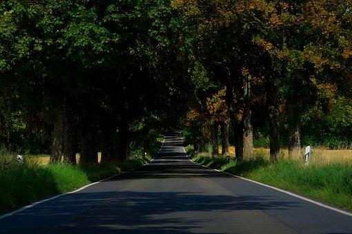 Avenue, Road, Trees, Away, Asphalt, Nature