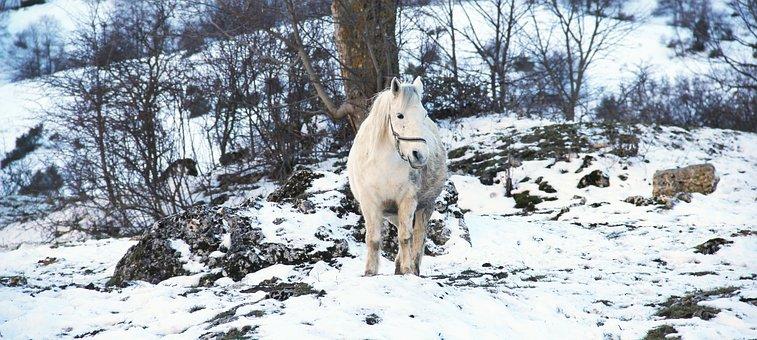 Horse, White, Snow, Winter, Riding, Riding School, Ride