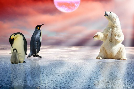 Polar Bear, Penguins, Arctic, Polar, Bear, Winter